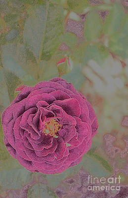 Photograph - Purple Rose by Diane montana Jansson