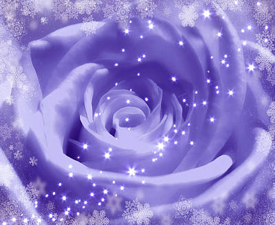 Photograph - Purple Rose With Snow And Stars by Johanna Hurmerinta