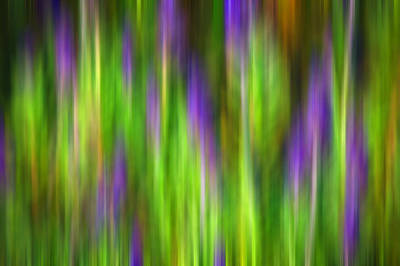 Photograph - Purple Sage Digital Abstracts Motion Blur by Rich Franco