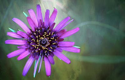 Photograph - Purple Salsify - 365-174 by Inge Riis McDonald