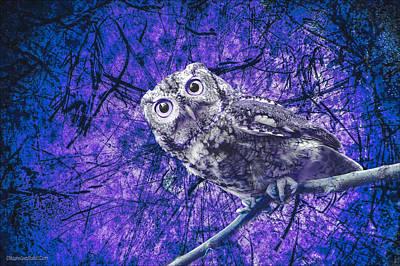 Photograph - Purple Screech Owl by LeeAnn McLaneGoetz McLaneGoetzStudioLLCcom