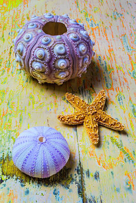 Purple Sea Stars Wall Art - Photograph - Purple Sea Urchin And Starfish by Garry Gay