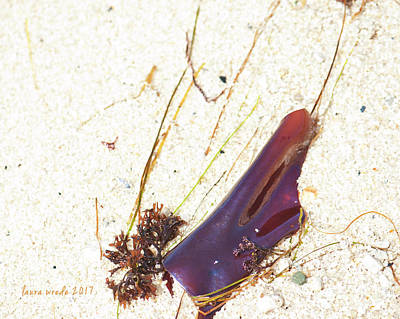 Photograph - Purple Seaweed In Pacific Grove California by Artist and Photographer Laura Wrede