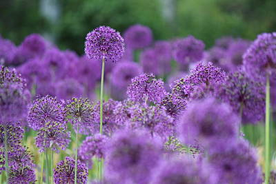 Purple Sensations Art Print