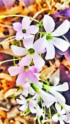 Photograph - Purple Shamrock Blossoms  by Rachel Hannah