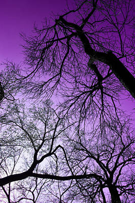 Photograph - Purple Sky by Josy Cue