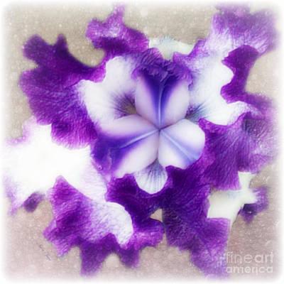 Splashy Photograph - Purple Splash by Anita Faye