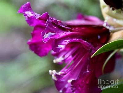 Photograph - Purple Splendor by Erica Hanel