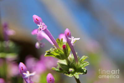 Photograph - Purple Spring Flora  by Neal Eslinger