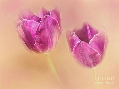 Photograph - Purple Spring Tulips by Pam  Holdsworth