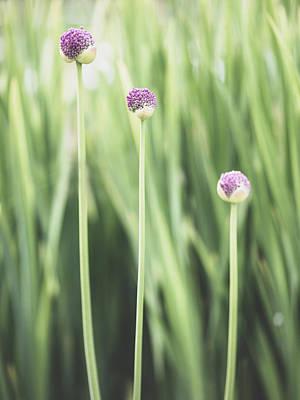 Photograph - Purple Stalks by Rebecca Cozart