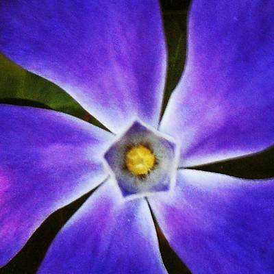 Photograph - Purple Star by Cheray Dillon