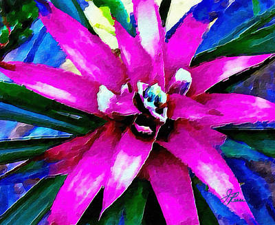 Photograph - Purple Star Flower Close Up by Joan Reese