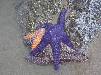 Photograph - Purple Starfish by Angi Parks