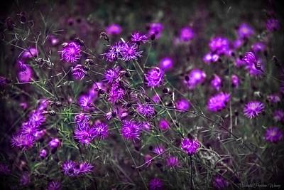 Photograph - Purple Stars by Michaela Preston