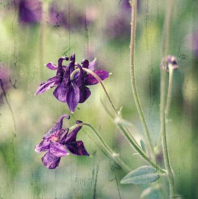 Susann Serfezi Photograph - Purple Summer by AugenWerk Susann Serfezi