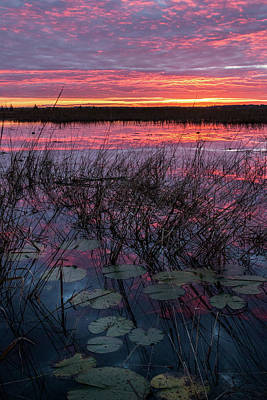 Photograph - Purple Sunrise With Lilypads #1 by Patti Deters