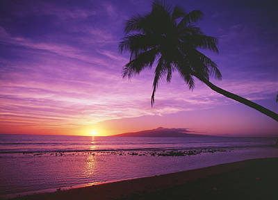 Photograph - Purple Sunset And Palm by Ron Dahlquist - Printscapes