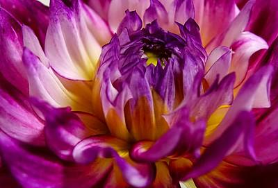 Art Print featuring the photograph Purple Sunset Flower 2 by Marianne Dow