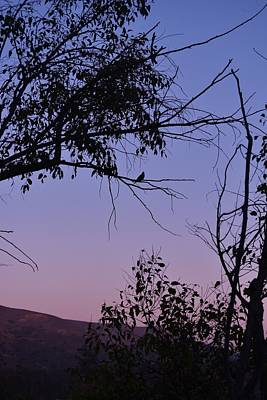 Purple Sunset With Tree And Bird Silhouette Art Print by Linda Brody
