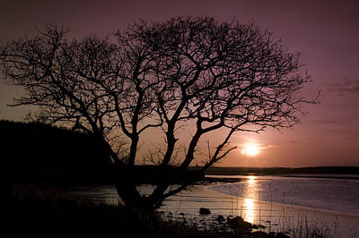 Art Print featuring the photograph Purple Sunset With Tree And Lake by Gabor Pozsgai