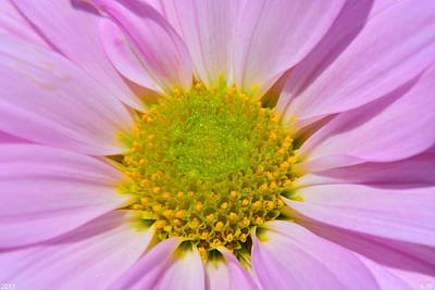 Photograph - Purple Sunshine by Lisa Wooten