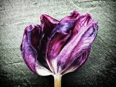 Purple Swirl Art Print by Karen Stahlros