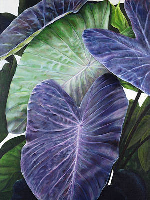 Art Medium Painting - Purple Taro by Sandra Blazel - Printscapes