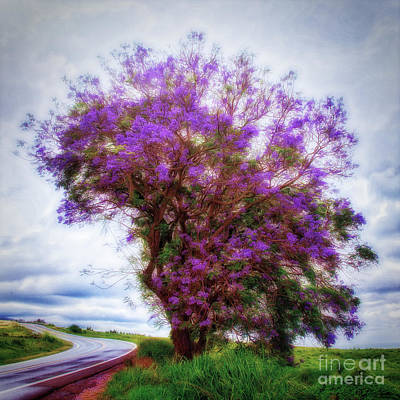 Photograph - Purple Tree  ... by Chuck Caramella