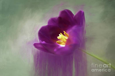 Photograph - Purple Tulip Art by Darren Fisher
