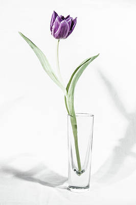 Photograph - Purple Tulip In A Vase II by Helen Northcott