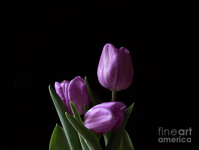Photograph - Purple Tulips by Andrea Silies