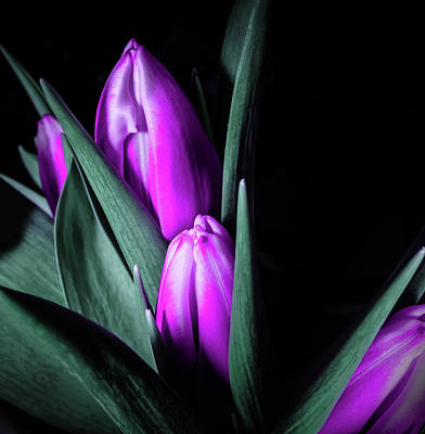 Black Photograph - Purple Tulips - Flowers Photography by Wall Art Prints