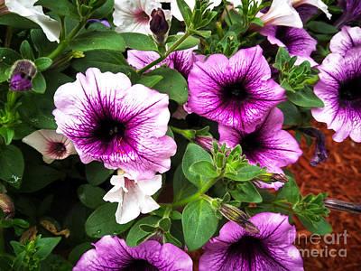 Photograph - Purple Vanity  by Robert Knight