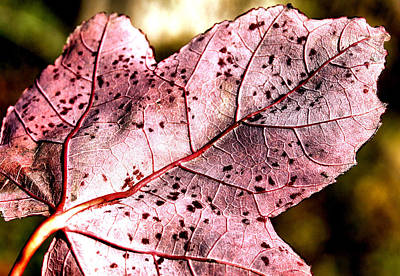Hues Of Purple Photograph - Purple Vein by Karen M Scovill