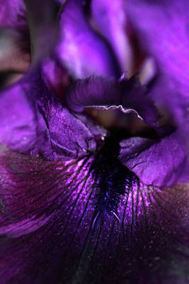 Photograph - Purple Velvet by Debbie Oppermann