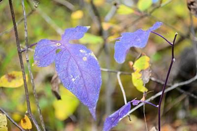 Photograph - Purple Vine by Bonfire Photography