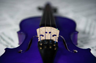Photograph - Purple Violin Bridge by Helen Northcott