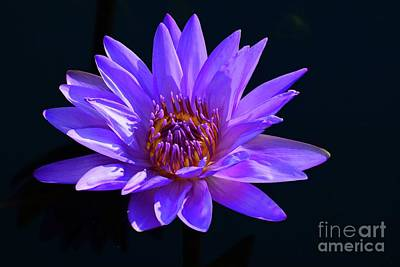 Photograph - Purple Water Lily by Cindy Manero