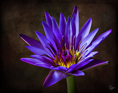 Photograph - Purple Water Lily by Endre Balogh