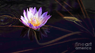 Photograph - Purple Water Lily by Mary Haber