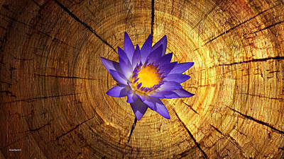 Photograph - Purple Water Lily On Wood by Gary Crockett
