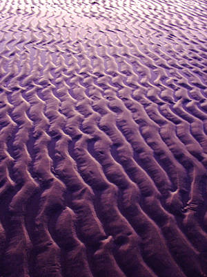Photograph - Purple Waves Of Sand by Jill Reger