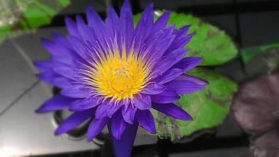 Purple Way Delight Art Print