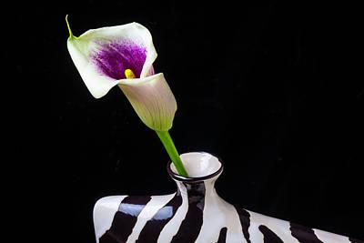 Purple White Calla In Vase Art Print