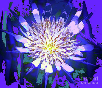 Photograph - Purple White Flower by Shirley Moravec