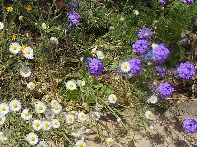 Photograph - Purple White Flowers by Mozelle Beigel Martin