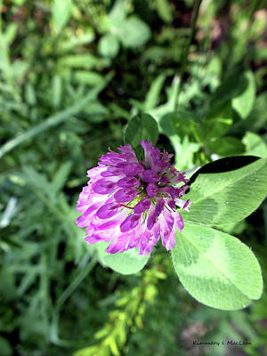 Photograph - Purple Wild Flower by Kimmary I MacLean