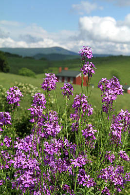 Photograph - Purple Wild Flowers On Field by Emanuel Tanjala