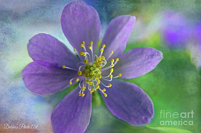 Photograph - Purple Wildflower by Debbie Portwood